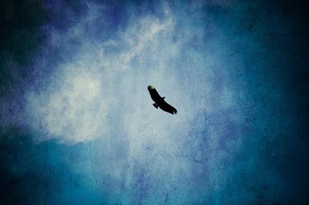 solitude bird sky450